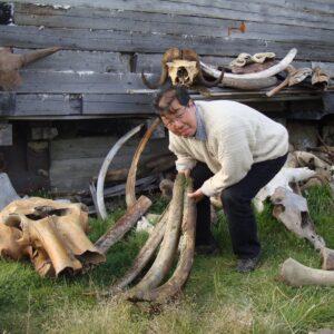 Monsieur Pak avec les restes de mammouth récoltés